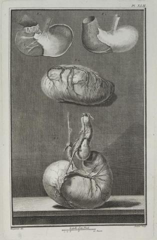 Image 2. Cours d'hippiatrique, Phillippe-Etienne LaFosse, 1772.