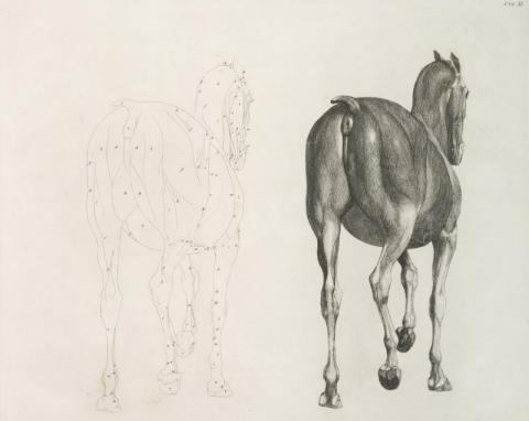 Image 2. The anatomy of the horse, George Stubbs, 1766.