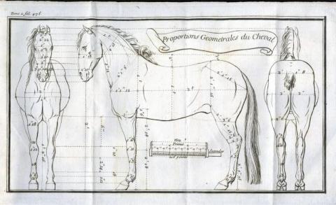 Medical illustration of horse